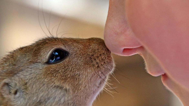 Използване на дермални филъри за корекции на носа