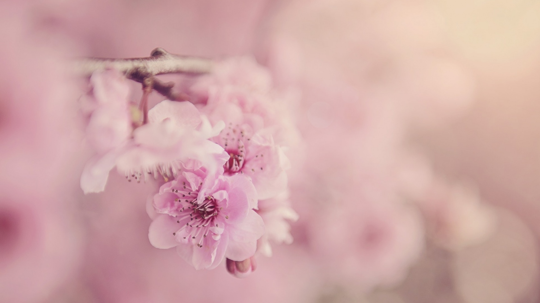 Какво представлява Розовият лишей (Питириазис розеа)