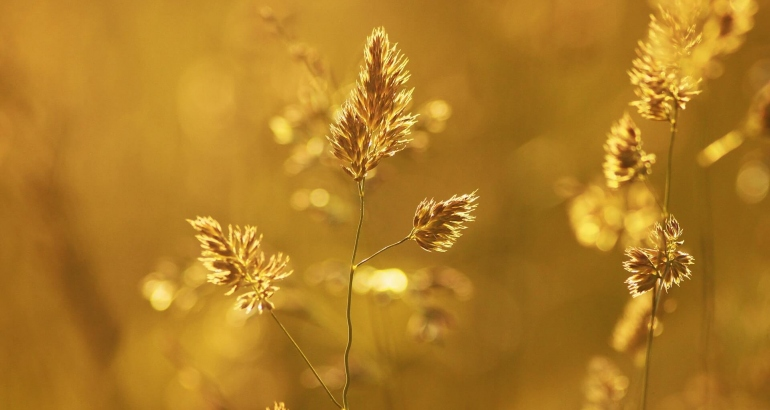 Златна терапия – процедурата на Клеопатра