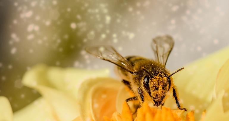 Алергични реакции след ухапвания от насекоми