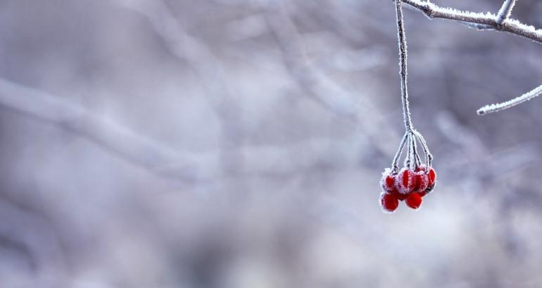 Как да премахнем червенината по носа през зимните месеци