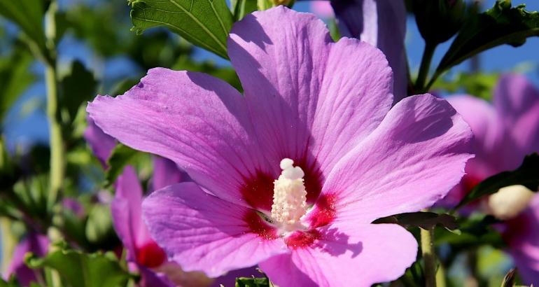 Слез – универсалната съставка за спокойна и хидратирана кожа